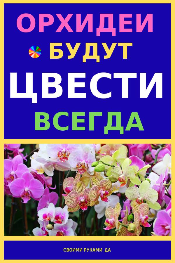 За этими цветами точно нужно тщательно ухаживать, обращая на них внимание. Ведь без этого не только шикарная орхидея, но и любое другое растение будет в буквальном смысле увядать на глазах. Ведь цветы обожают, когда их любят и ценят! Девочки, делюсь маминым способом заставить цвести любую орхидею