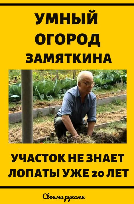 Умный огород Замяткина: участок не знает лопаты уже 20 лет. Дача и сад своими руками