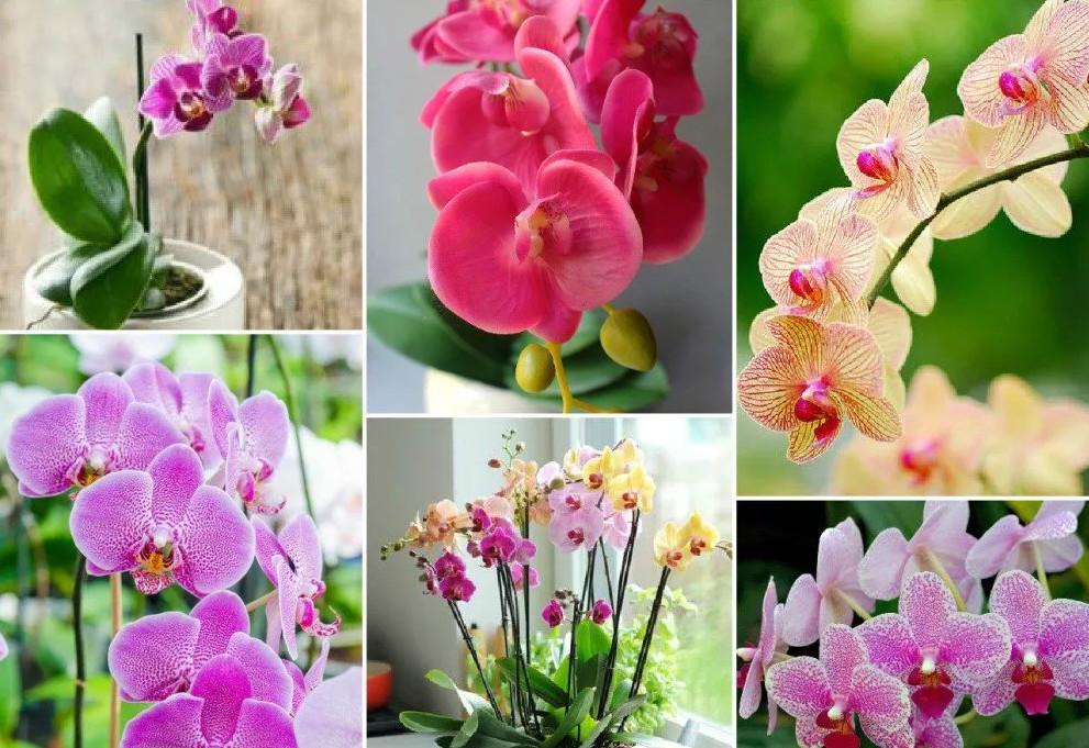 Как заставить цвести любую орхидею? Девочки, делюсь маминым способом: Уход за комнатными цветами