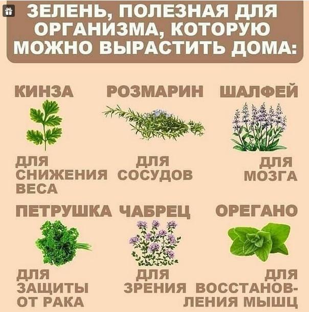 Полезная зелень, которую можно выращивать на подоконнике. Берем на заметку!