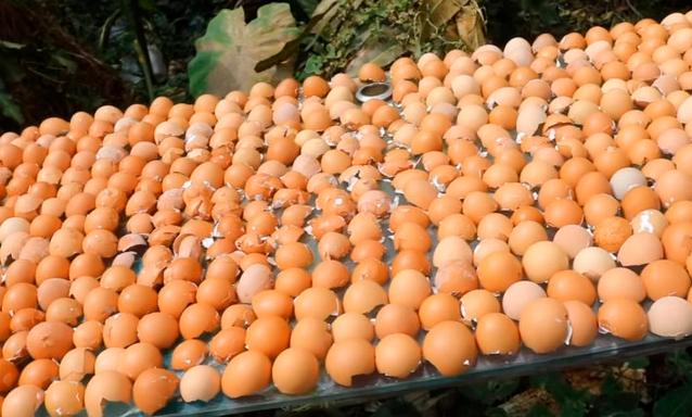 Незаменима на огороде: удивительные применения яичной скорлупы
