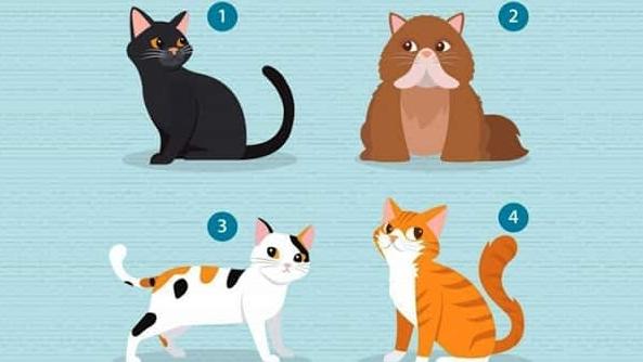 Что вам нужно в отношениях. Выберите кошку и узнаете.