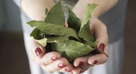 Этот лист — невероятно мощное средство от высокого давления, сахара в крови, кашля, отёков и лишнего веса