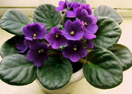 Не поверите, этот стимулятор роста для цветов продается в аптеках за сущие копейки