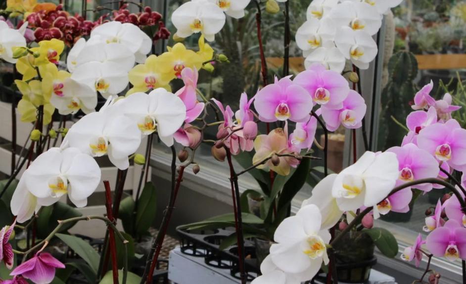 Девочки, делюсь маминым способом заставить цвести любую орхидею